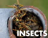 protect workers from wasps, bees, yellow jackets and flying insects